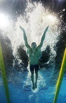 La mariposa Phelps