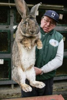 De conejos y hombres